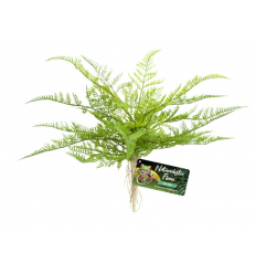 Zoo Med Naturalistic Flora – Lace Fern