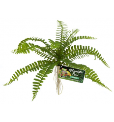 Zoo Med Naturalistic Flora – Sword Fern